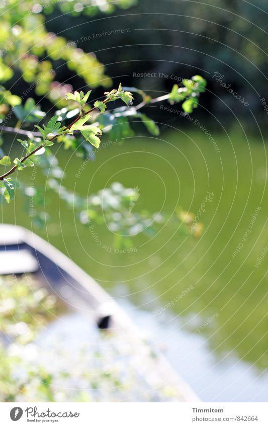 Wasserzeichen | Sanft, sanft, sanft. Umwelt Natur Pflanze Schönes Wetter Grünpflanze See Ruderboot hell natürlich grün Gefühle Verfall Zweig Blatt untergehen