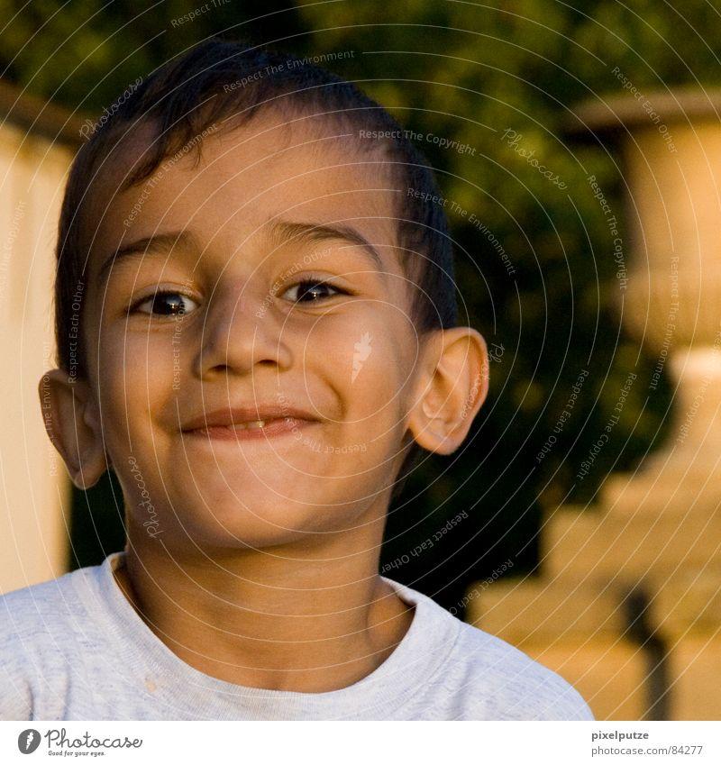 Schneekönig im Spätsommer Kind Natur schön Sommer Freude Junge lachen lustig braun Beleuchtung Fröhlichkeit süß Ohr niedlich nah Kleinkind