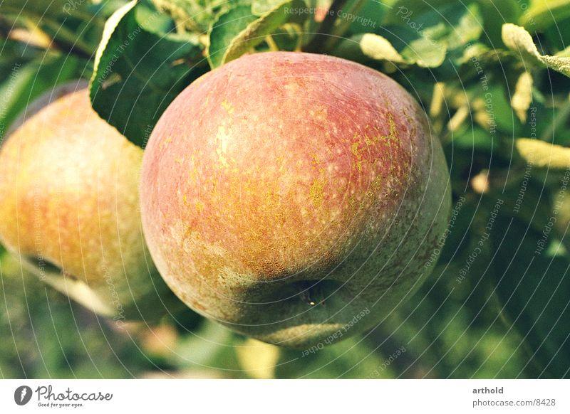 Frisch vom Baum Herbst Vitamin frisch Gesundheit saftig lecker Apfel Frucht Biologische Landwirtschaft Vegetarische Ernährung