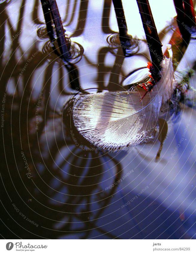 federleicht Wasser Einsamkeit See weich Feder zart leicht einzeln