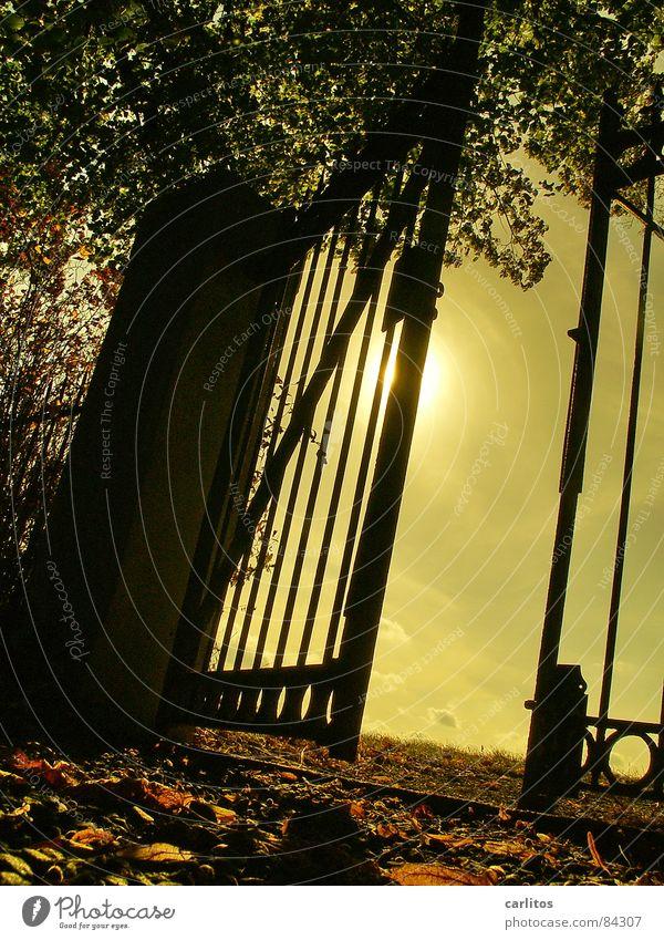 Der Blick zurück II Tor Friedhof ruhig Ewigkeit Unendlichkeit ruhen Tod Froschperspektive Gegenlicht Schmiedeeisen Schmiedekunst Pfosten Religion & Glaube