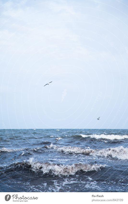 ANCHOR ME Ferien & Urlaub & Reisen blau Wasser Sommer Meer Tier Ferne Herbst Küste Freiheit Horizont Vogel Luft Wellen Tourismus nass