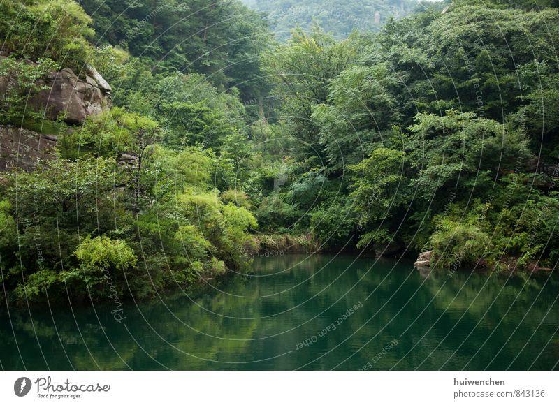 Natur Pflanze grün Sommer Baum Landschaft Blatt Wald Berge u. Gebirge See ästhetisch Schönes Wetter Ewigkeit Hügel Gelassenheit Gerechtigkeit