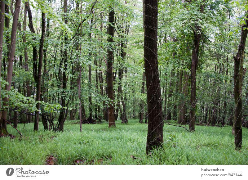 Wald Natur Landschaft Pflanze Frühling Sommer Baum Gras Urwald natürlich braun grün Gelassenheit ruhig bequem Farbfoto Außenaufnahme Menschenleer Tag