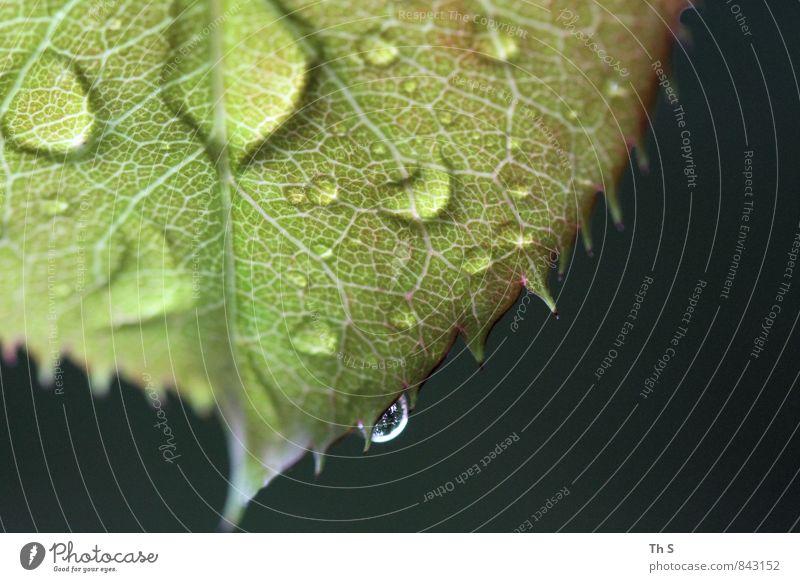 Blatt Natur grün Sommer schwarz Frühling natürlich Regen elegant authentisch ästhetisch nass einfach Blühend Coolness Tropfen