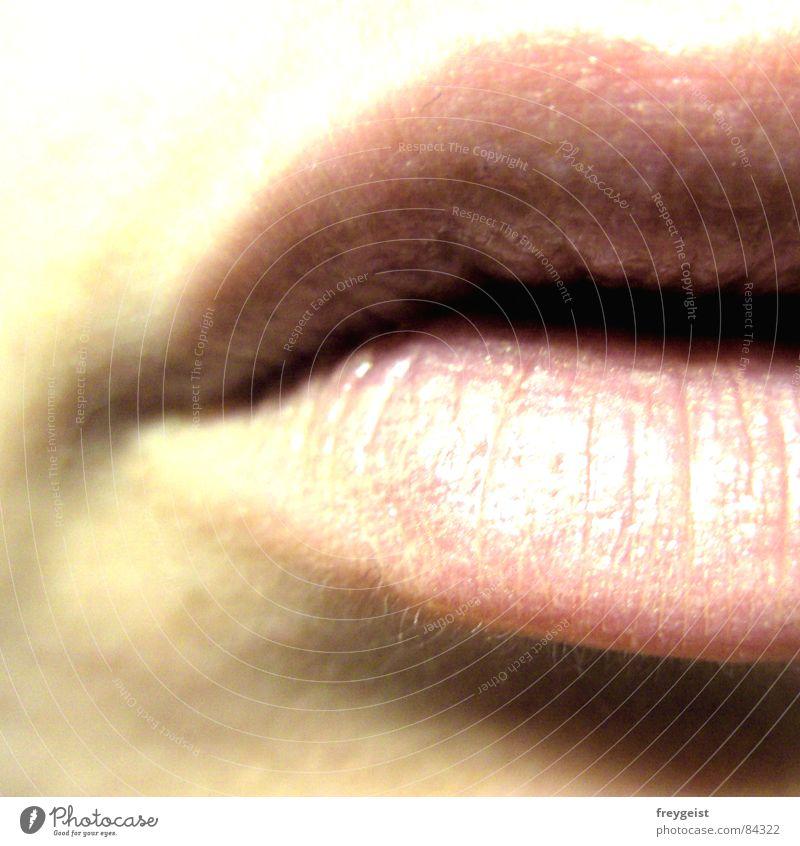 Lippenbekenntnis Küssen zart Frau Lipgloss glänzend Lippenpflege lips hauch Mund kiss mouth face Haut skin woman Mensch