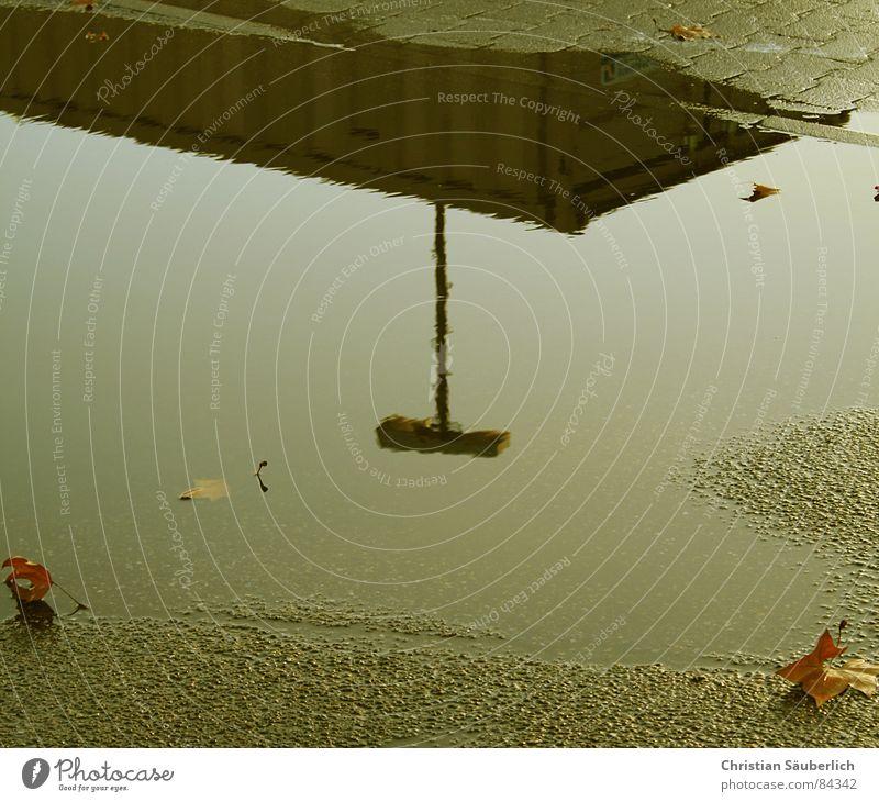 HAHA habe auch ne' Pfütze Wasserlache Spiegel Spiegelbild Blatt Teer Parkplatz Verkehrswege Überseekontainer Wohnkontainer Knochensteine