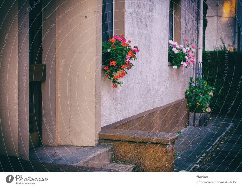 verschönerungsversuch Häusliches Leben Wohnung Haus Dekoration & Verzierung Pflanze Blume Topfpflanze Mauer Wand Fenster Tür Beton Blühend Wachstum ästhetisch