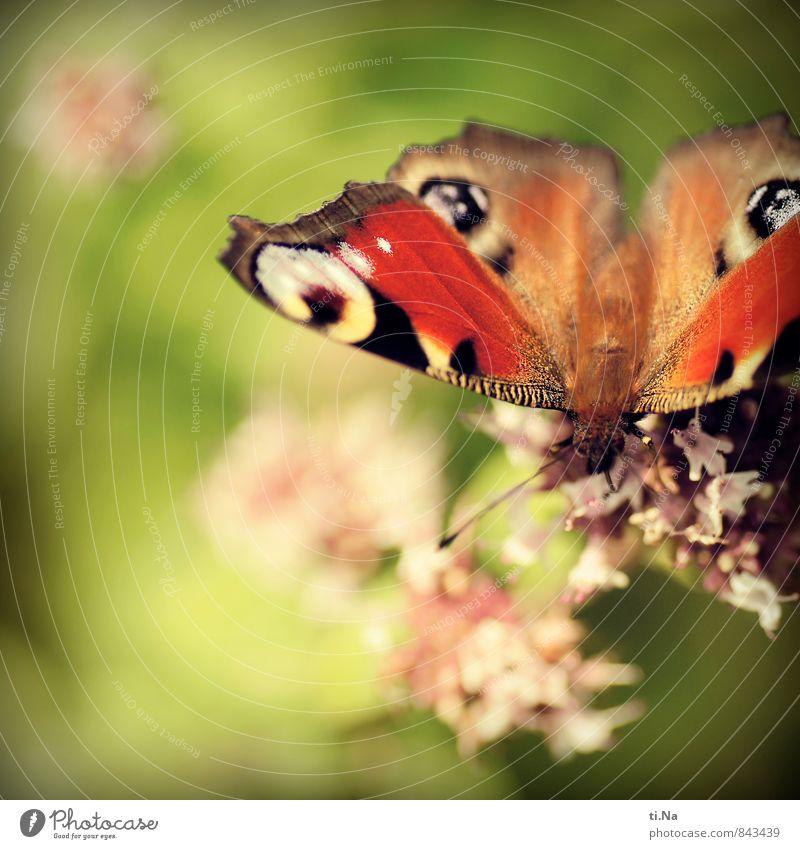Happy Purzeltag Photocase Wildtier Schmetterling berühren Duft ästhetisch elegant Frühlingsgefühle Pause Farbfoto Außenaufnahme Nahaufnahme Makroaufnahme