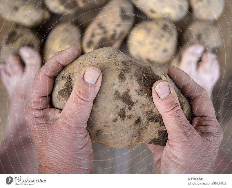 die dümmsten bauern... Natur nackt Sommer Hand Leben Herbst Holz Glück Gesundheit Fuß Lebensmittel Arbeit & Erwerbstätigkeit Erde Zufriedenheit groß einfach