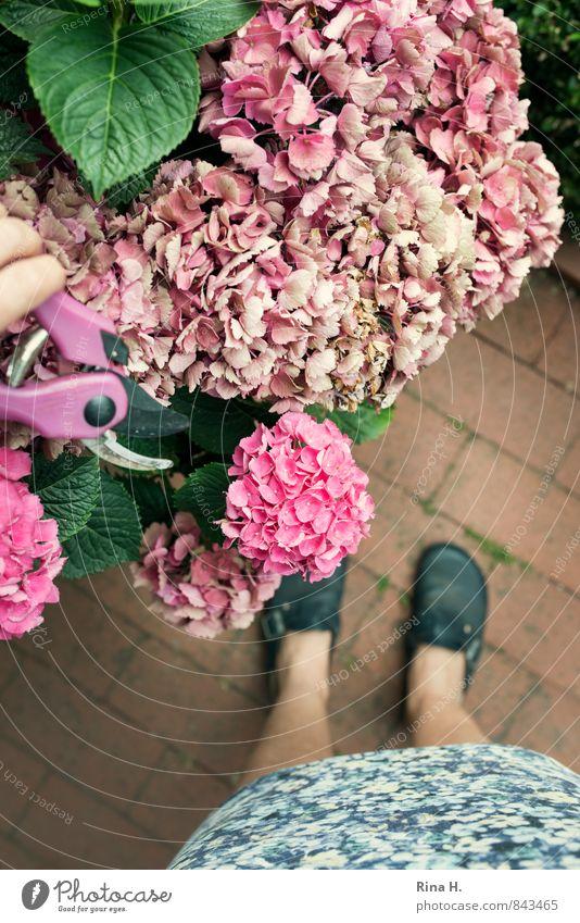 Gärtnerin II Frau Erwachsene 1 Mensch Sommer Pflanze Blume Garten Rock Schuhe Arbeit & Erwerbstätigkeit authentisch Erholung Zufriedenheit Hortensie