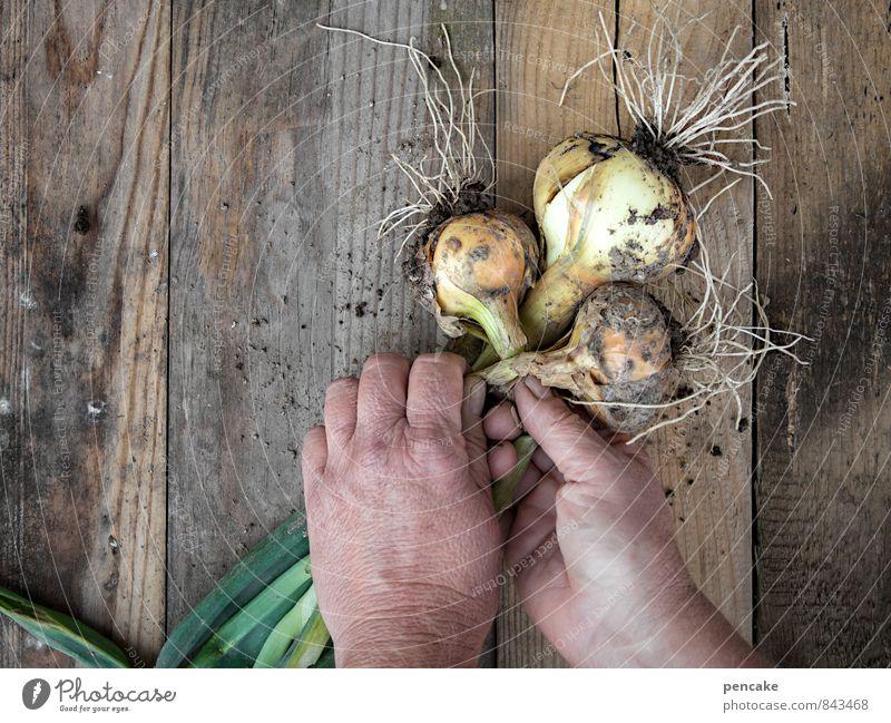 zwiebelzopf flechten (falsch!) Natur Sommer Hand Erwachsene Herbst Glück Gesundheit Garten Arbeit & Erwerbstätigkeit Zufriedenheit 45-60 Jahre warten Lebensfreude Gemüse Gelassenheit Ernte