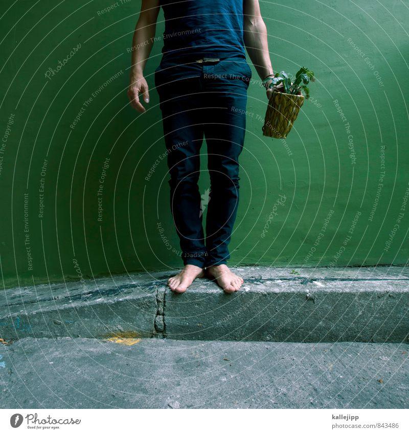 grünpflanze Mensch maskulin Mann Erwachsene Beine Fuß 1 Umwelt Natur Landschaft Pflanze Tier Grünpflanze Topfpflanze nachhaltig Kaktus stoppen stehen Mauer