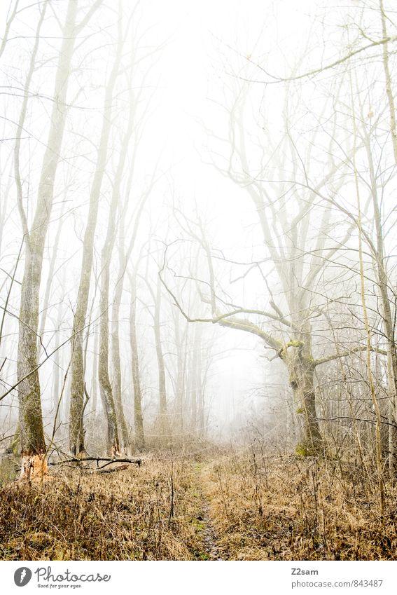 Zauberwald Umwelt Natur Landschaft Herbst Winter Klima schlechtes Wetter Nebel Baum Sträucher Wald kalt nachhaltig natürlich Einsamkeit geheimnisvoll Idylle