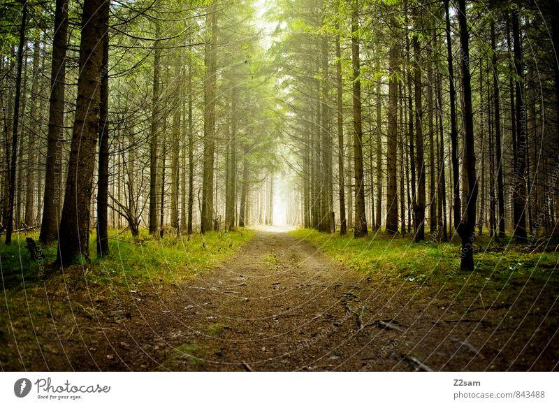 Zauberwald Umwelt Natur Landschaft Herbst Schönes Wetter Baum Sträucher Moos Wald dunkel frisch nachhaltig natürlich grün ruhig Einsamkeit Idylle Surrealismus