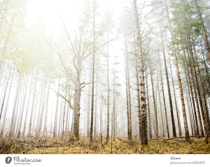 Zauberwald Umwelt Natur Landschaft Sonne Sonnenlicht Herbst Klima Wetter Schönes Wetter Nebel Baum Sträucher Wald frisch gigantisch nachhaltig natürlich grün