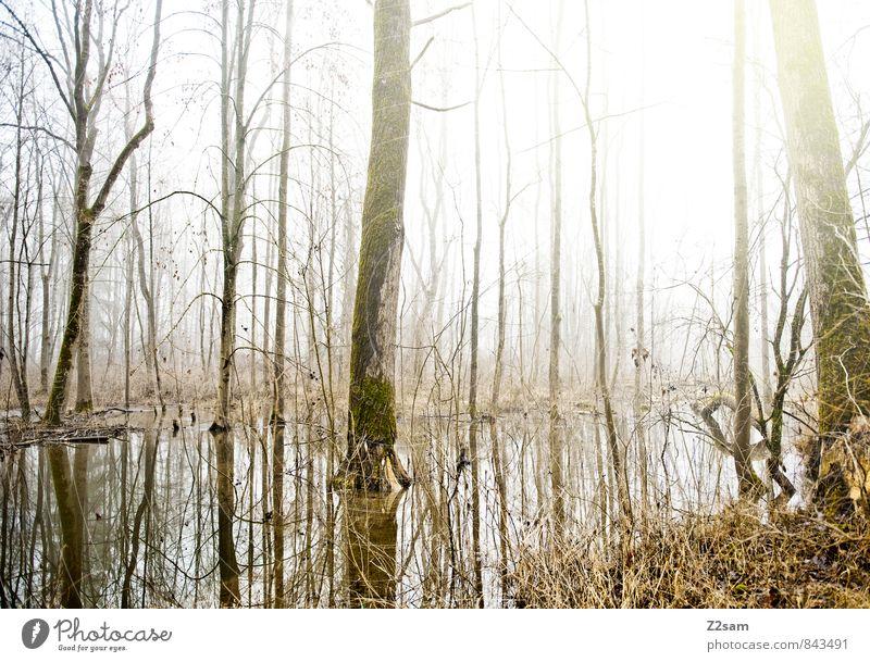 Ein Tag wie jeder andere Natur Wasser Sonne Baum Einsamkeit Landschaft ruhig Winter Wald Umwelt natürlich Idylle Sträucher frisch Schönes Wetter Vergänglichkeit