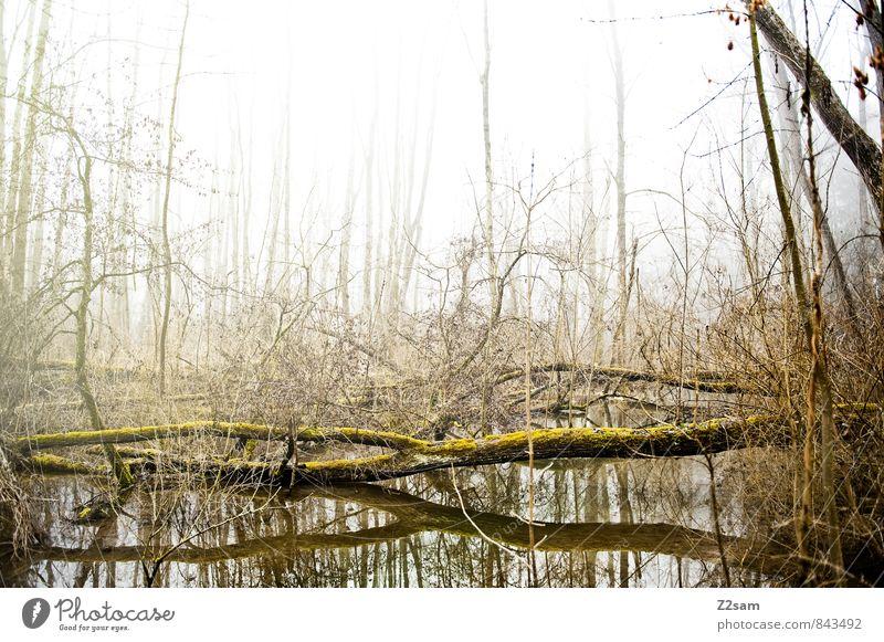 Zauberwald Umwelt Natur Landschaft Herbst schlechtes Wetter Nebel Baum Sträucher Wald Gesundheit hell kalt nachhaltig natürlich trist ruhig Einsamkeit
