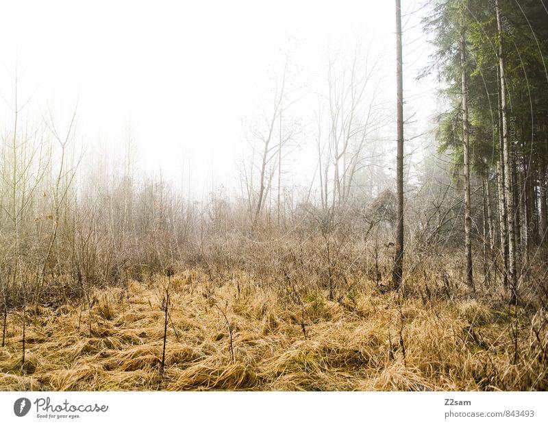 Zauberwald Natur Pflanze Landschaft ruhig Wald kalt Umwelt Traurigkeit Herbst natürlich träumen Nebel trist Sträucher frisch Vergangenheit