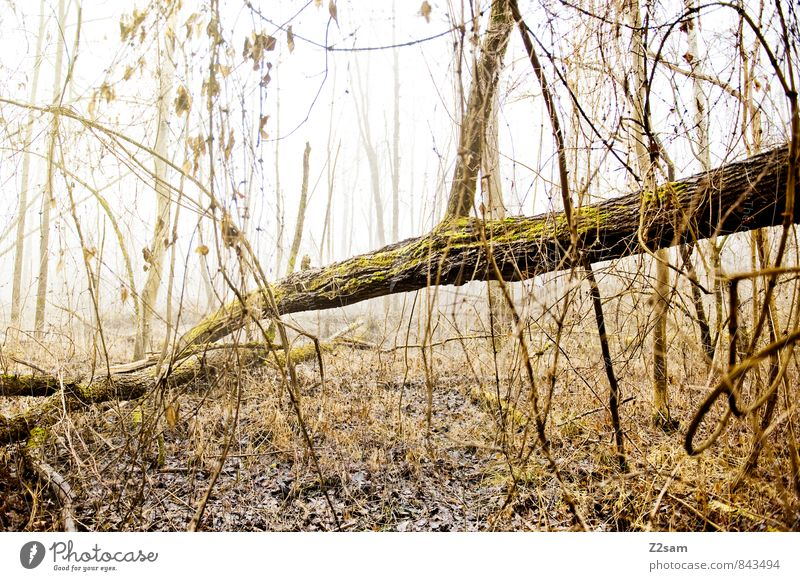 Zauberwald Natur grün Baum Einsamkeit ruhig Landschaft Blatt Winter kalt Umwelt gelb Herbst natürlich Stimmung Nebel Idylle