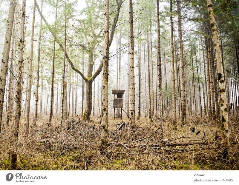 Jägerstand Umwelt Natur Landschaft Herbst Klima Wetter Nebel Gras Sträucher Wald Hochsitz Ferne kalt nachhaltig natürlich gelb grün ruhig Einsamkeit