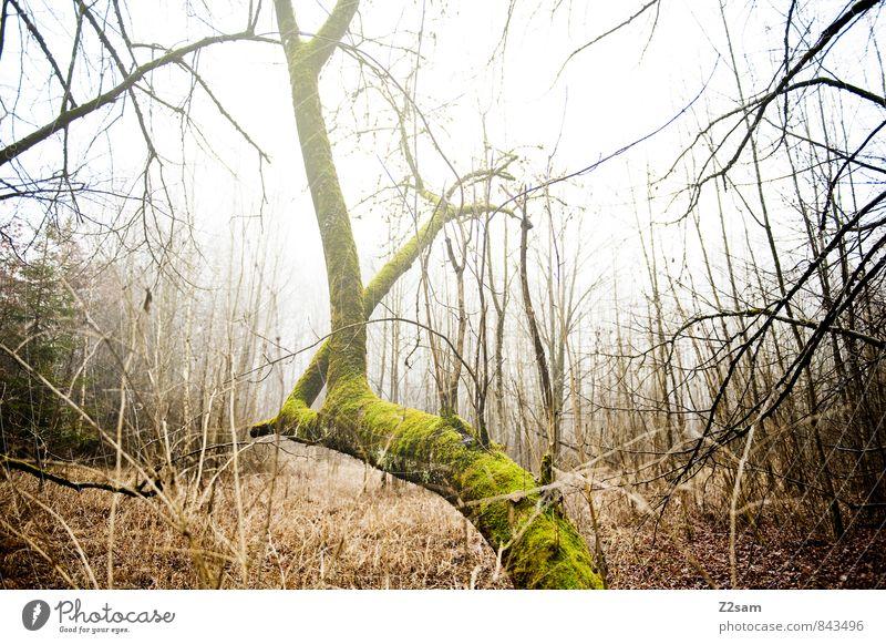 Zauberwald Umwelt Natur Landschaft Herbst Winter Klima schlechtes Wetter Nebel Baum Gras Sträucher Moos Wald Fröhlichkeit kalt nachhaltig natürlich gelb grün