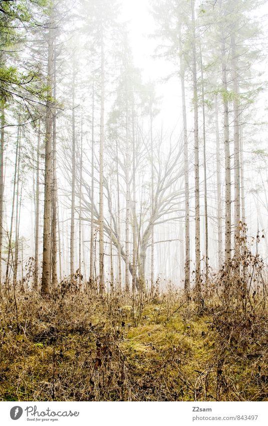 Zauberwald Natur grün Baum Einsamkeit Landschaft ruhig Wald kalt Umwelt gelb Herbst natürlich träumen Idylle Nebel Sträucher