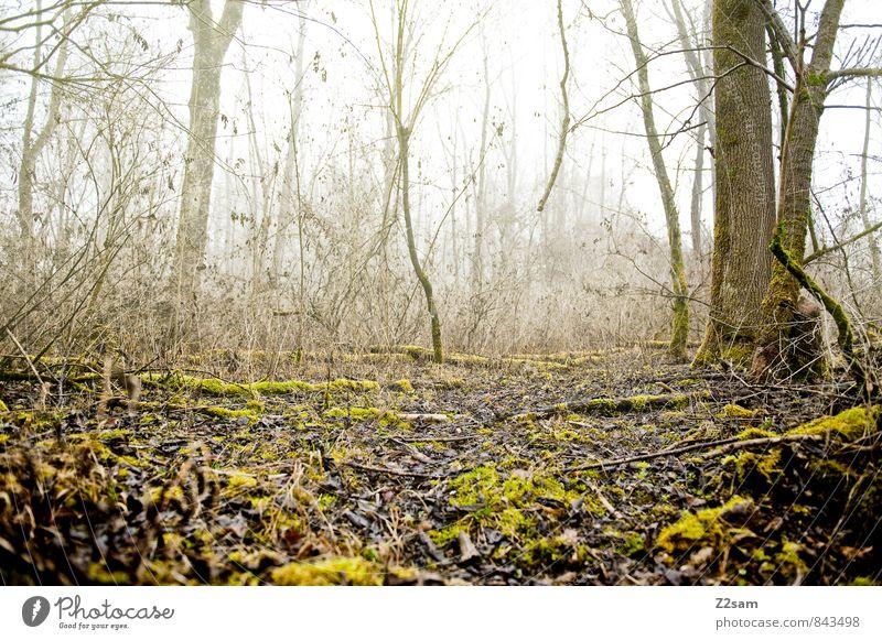 Back to the woods Umwelt Natur Landschaft Herbst Winter schlechtes Wetter Nebel Baum Sträucher Moos Wald kalt nachhaltig natürlich braun gelb grün Einsamkeit