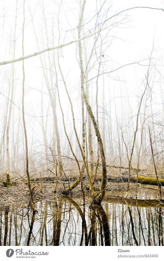 Zauberwald Umwelt Natur Landschaft Sonnenlicht Herbst Winter Nebel Baum Wald Moor Sumpf See ästhetisch frisch kalt natürlich ruhig träumen bizarr Einsamkeit