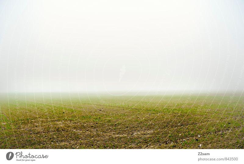 ––––––– Umwelt Natur Landschaft Erde Herbst Klima Wetter schlechtes Wetter Nebel Wiese Feld dunkel einfach kalt nachhaltig natürlich grau grün ruhig Einsamkeit
