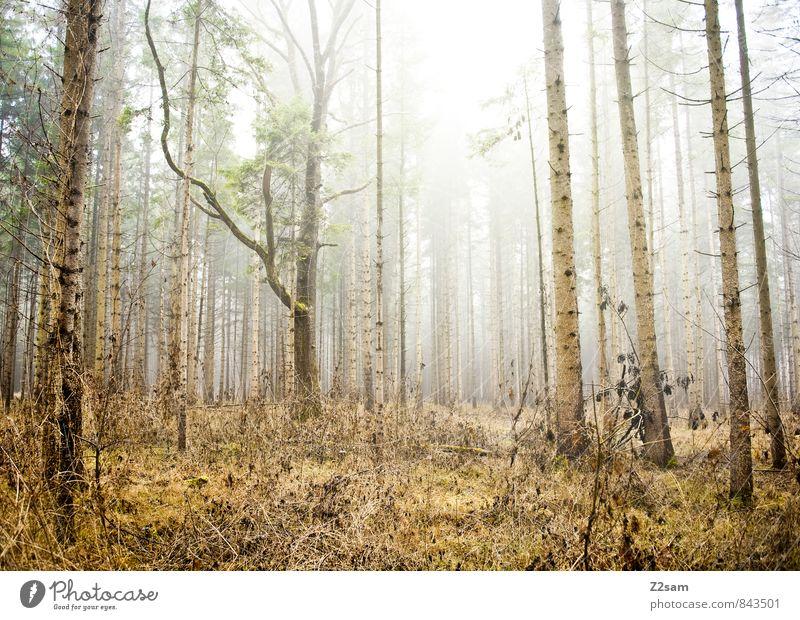Zauberwald Umwelt Natur Landschaft Herbst Winter Klima Schönes Wetter Nebel Baum Sträucher Moos Wald gruselig kalt nachhaltig natürlich braun gelb grün