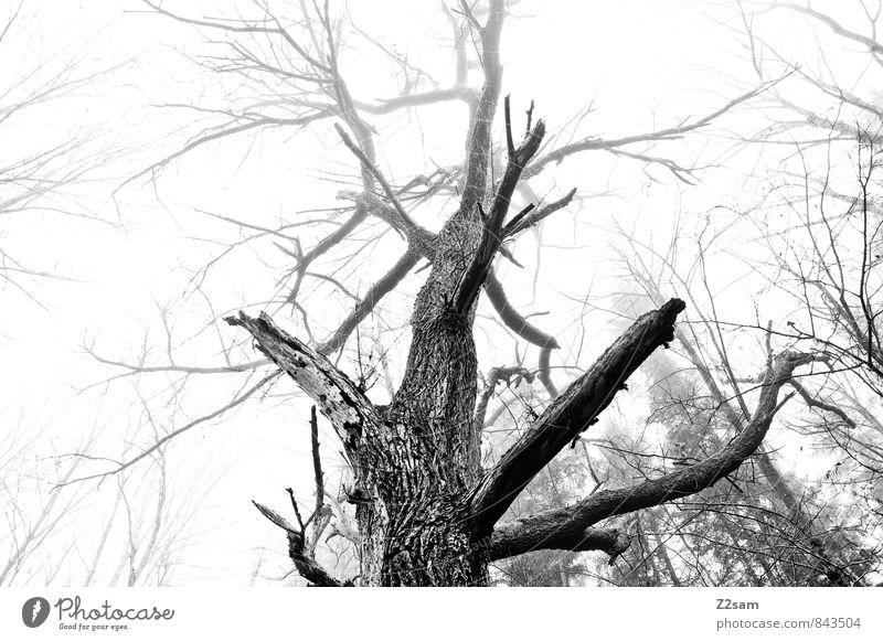 Big Brother Natur Baum Landschaft ruhig dunkel kalt Umwelt natürlich Gesundheit elegant Nebel Idylle Sträucher groß Perspektive ästhetisch