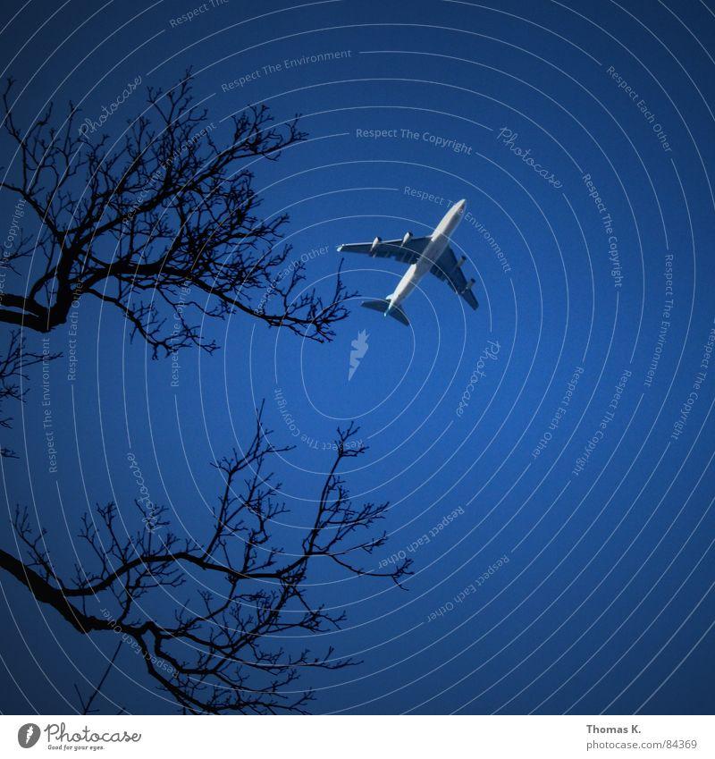 Kleines Flugzeug am Himmel die 100ste... Baum Winter Ferien & Urlaub & Reisen hoch Luftverkehr Ast Schmerz Tragfläche Maschine Flugzeuglandung Zweig Pilot