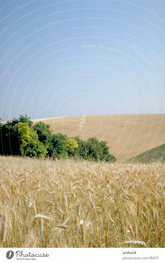 Getreidefelder Feld Hügel Bundesland Niederösterreich Kornfeld Kornkammer Hügelland hügelig Weinviertel Ostösterreich