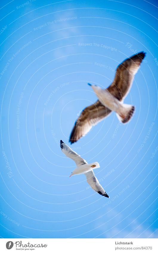 du und ich Himmel weiß Meer blau Sommer Strand Tier Bewegung Freiheit See Tanzen Vogel Küste Tierpaar Wind Wetter