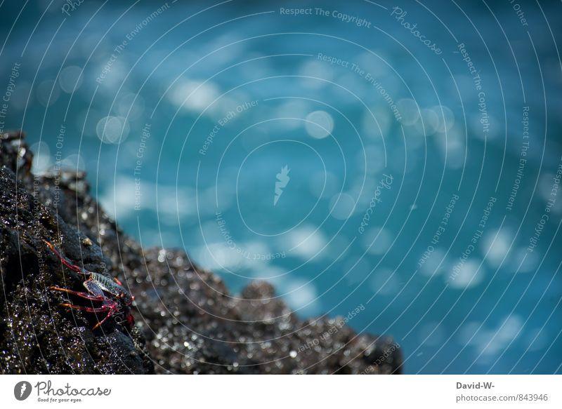 Mr. Crabs auf dem Weg ins Meer Natur blau Wasser Sommer Tier Umwelt Küste Wege & Pfade Felsen Angst wandern beobachten Bucht türkis Tiergesicht