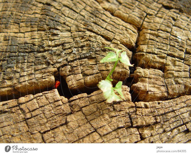 into the cranny Natur Leben springen braun Kraft Holz Schiffsbug Makroaufnahme Holzmehl sensitiv