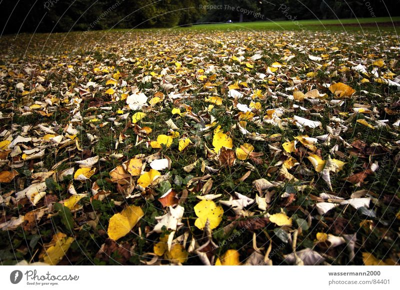 Herbststimmung Blatt Wiese Rasen obskur Verfall trüb bedecken Niedergang