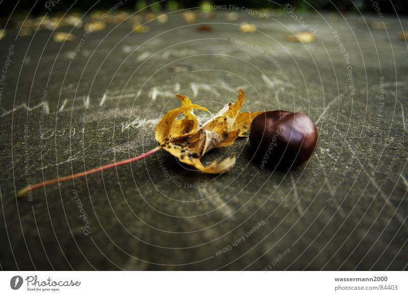 Herbststimmung Blatt Herbst Wandel & Veränderung verfallen obskur Stillleben Kreide Kastanienbaum Übergang verwandeln unbeständig