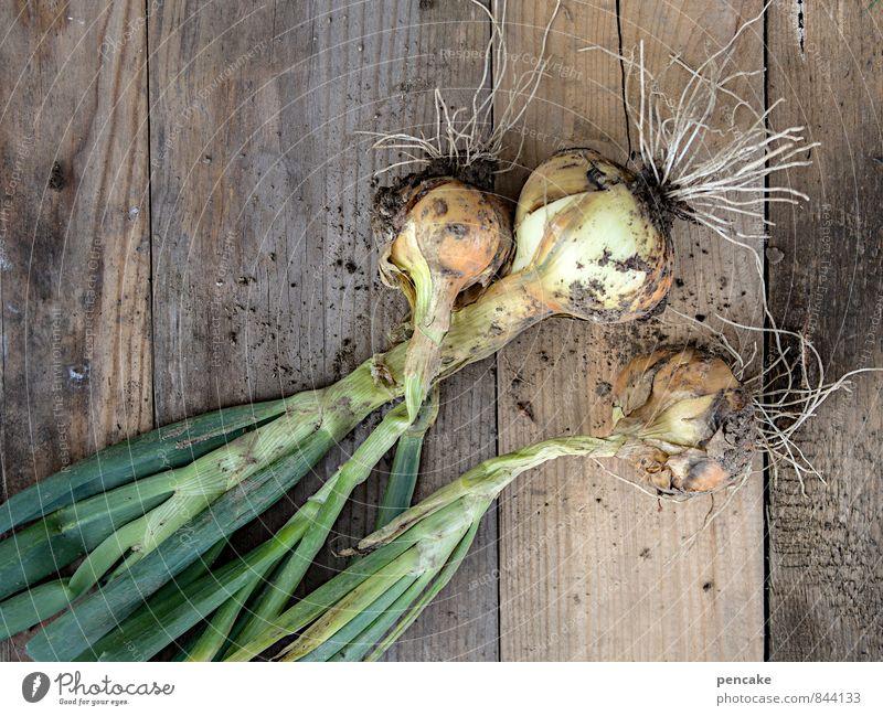 stuttgarter riesen Natur grün Sommer Herbst grau Gesundheit Idylle Zufriedenheit authentisch Lebensfreude Sicherheit Gemüse lecker Ernte Duft trocknen