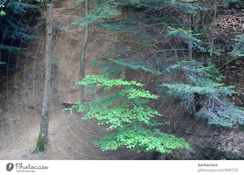 Boden- und Ackertag | Waldboden Landschaft Erde Baum Hügel Berge u. Gebirge wild braun grün Freizeit & Hobby Natur ruhig Umwelt Wege & Pfade Farbfoto