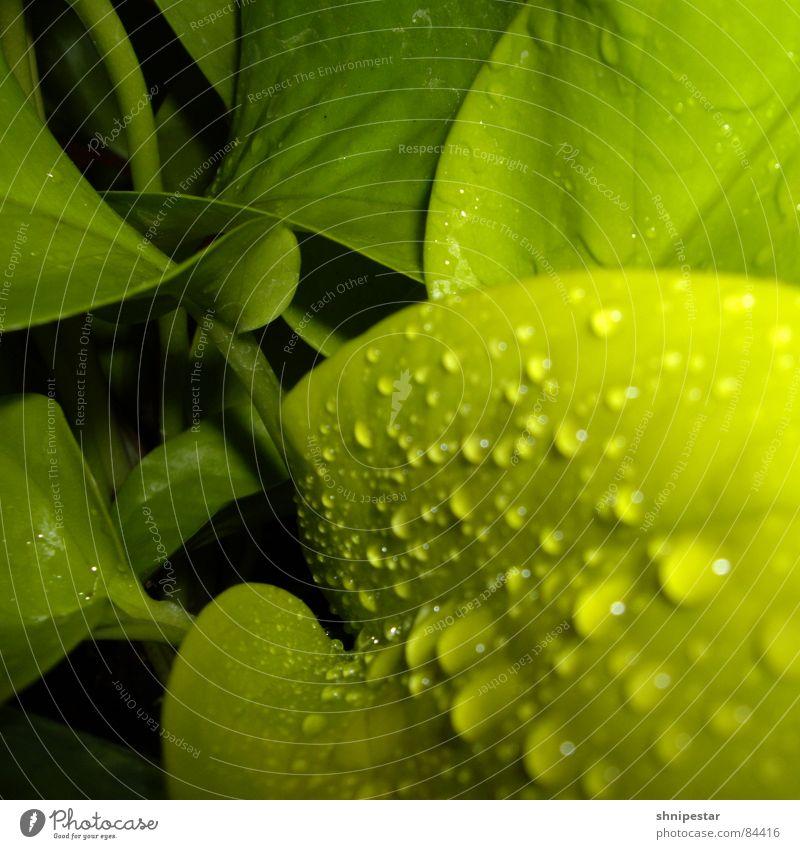 quadratur des blattes grün dunkel Frühling Kraft Kraft nah Tropfen Stengel Quadrat tief Aggression Gift Chemie künstlich unreif Digitalkamera