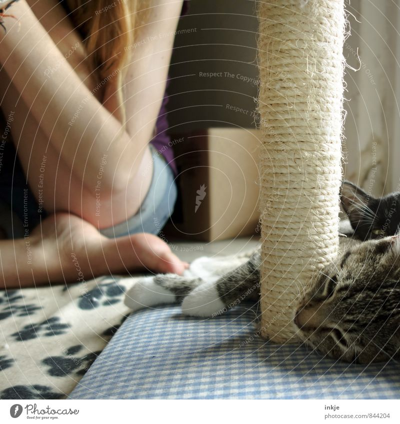 chill out zone Katze Mensch Jugendliche Erholung Junge Frau ruhig Mädchen Tier Tierjunges Leben Gefühle Stimmung liegen Freizeit & Hobby Zusammensein Idylle