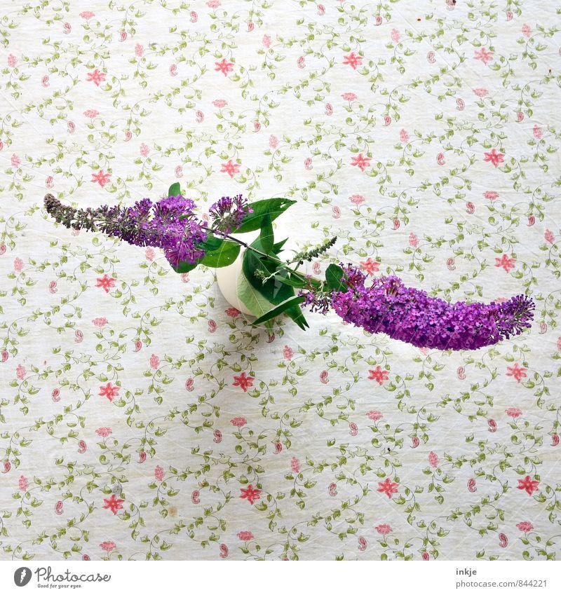 Da habt Ihr Euer Q ! schön grün weiß Sommer rot Blume Blüte natürlich Stil klein Häusliches Leben Dekoration & Verzierung Blühend violett lang Duft