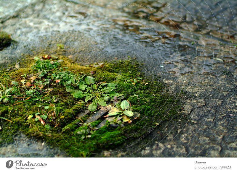 Feuchtbiotop Kiesbett Gully Pflanze grün feucht nass Gras Rinnstein Straßenbelag Regen Abfluss verfallen Entwässerung Dränage Entwässerungsanlage