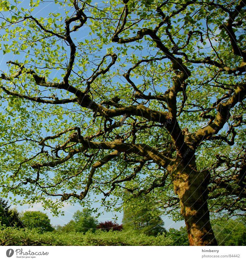 crown royal Natur Himmel Baum grün Blatt Wald Frühling Garten Landschaft Ast Baumstamm Baumkrone Zweig Gartenbau Landschaftsformen
