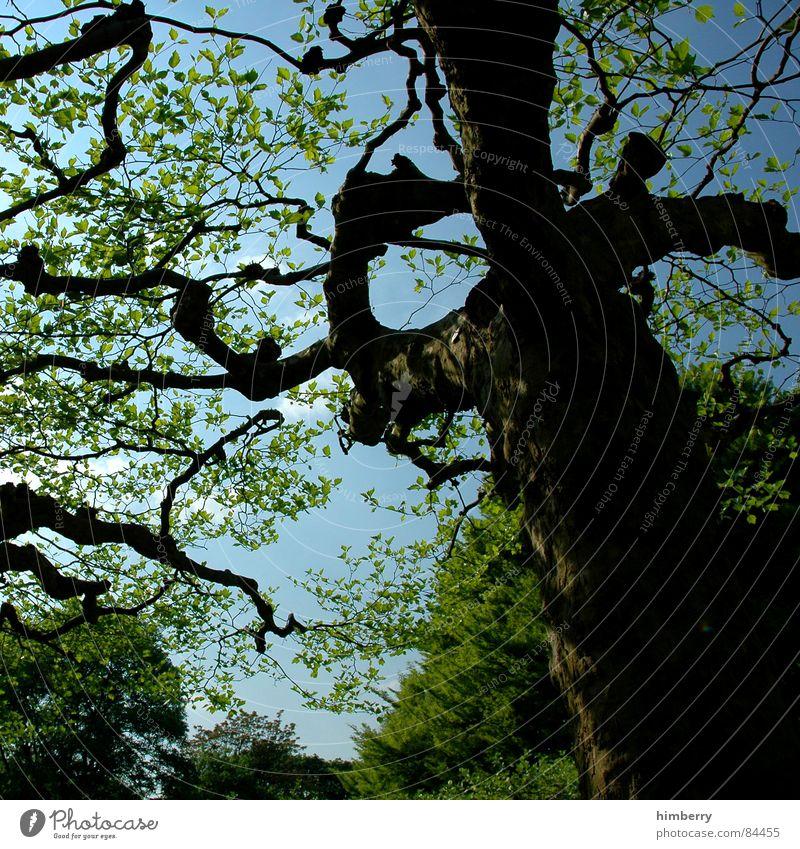 stammbaum Natur Himmel Baum grün Blatt Wald Frühling Garten Park Landschaft Ast Baumstamm Baumkrone Zweig Gartenbau Landschaftsformen