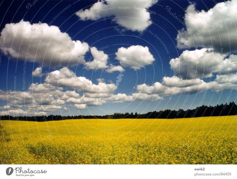 Schwedische Landwirtschaft Natur Himmel blau Pflanze Sommer Ferien & Urlaub & Reisen Wolken gelb Ferne Freiheit Landschaft Feld Umwelt groß Horizont Energiewirtschaft