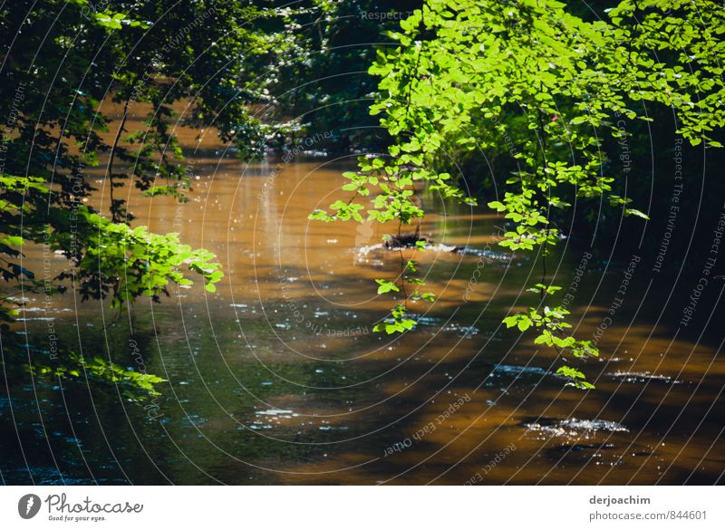 Auf sandigen Bett die Schwarzach. Wildromantischer Fluss in der Schwarzachklamm.Grüne Äste ragen über den Fluss. Die dunkle Farbe des Flusswassers nach der Schneeschmelze.Die Ache, nach einer Keltisch- germanischen Bezeichnung für Bach.