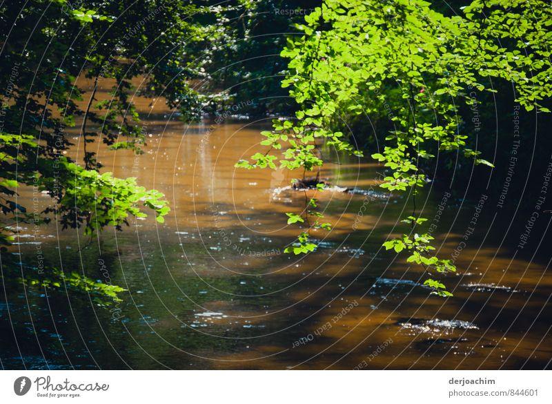 Schwarzach Idyll Natur Wasser Sommer Erholung ruhig Umwelt Sand braun Deutschland Freizeit & Hobby Sträucher Lächeln Ausflug beobachten einzigartig Romantik
